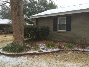 Icy precipitation collecting in front of our home ... a rare sight for our mild Louisiana winters.